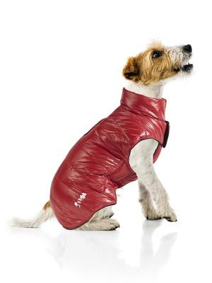 Doudoune imperméable pour chien