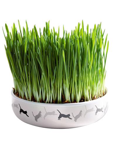 Ecuelle en céramique herbe à chat -  - Blanc