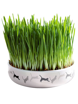 Ecuelle en céramique herbe à chat
