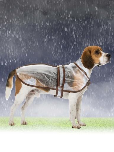 Imperméable pour chien -  - Transparent