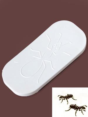 Plaquette fourmis